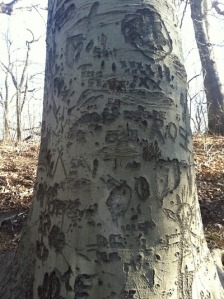 treecarvings